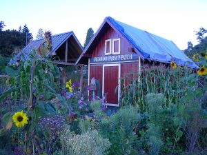 The P-Patch community garden is on the site of the former Picardo Farm.  Photo courtesy of Joe Mabel.