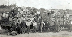 Picardo farm workers in 1923.