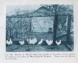 In a 1920s real estate brochure for the Morningside Heights development, the glories of raising ones' own chickens was advertised using Walter Wood's home as an example.