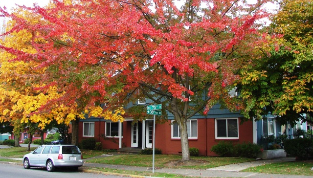 Autumn at Wedgewood Estates Apartments
