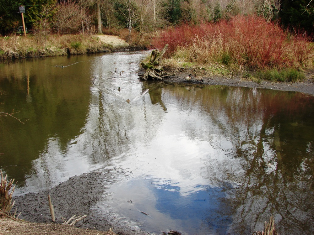 The Thornton Creek Confluence at Meadowbrook Pond (1/6)