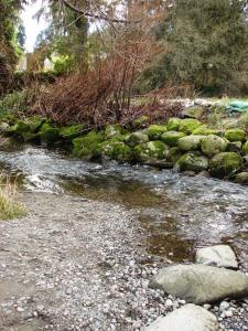 Meadowbrook Pond mossy rocks