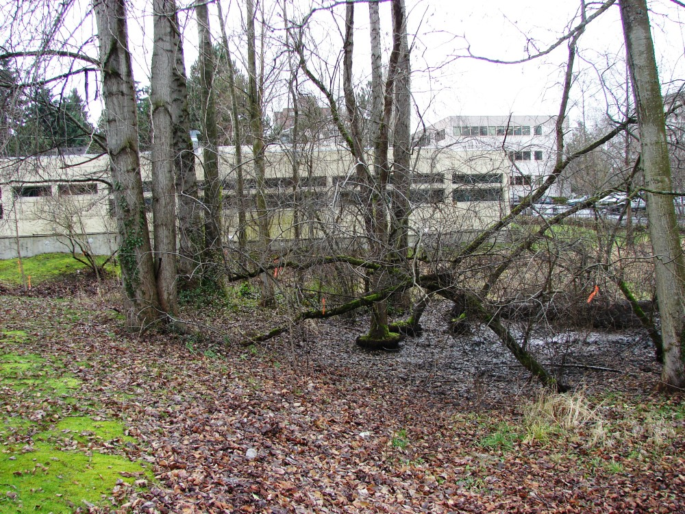 The Thornton Creek Confluence at Meadowbrook Pond (3/6)