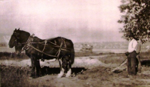 Roy Land is shown here with his horse team doing landscaping work at Green Lake.