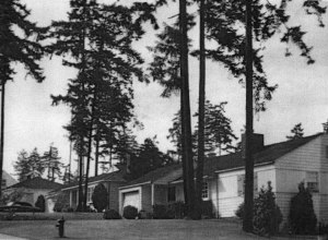 A 1953 view of NE 81st Street in the original Wedgwood emphasized its natural setting in tall trees. Photo by Werner Lenggenhager in the Seattle Public Library Historic Photos Collection.