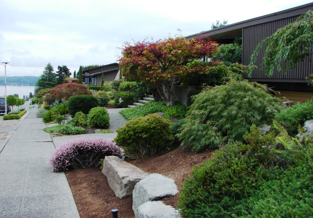 The first houses built in Inverness in 1954 were on NE 85th Street, with views of Lake Washington to the northeast. The backyards of these houses look south over the Sand Point Country Club golf course.