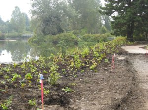 Landscaping with hundreds of trees and native plants will line the banks of Meadowbrook Pond where it has been enlarged at its northwest corner.