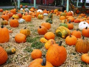 Hunter Tree Farm pumpkin sales are open on October weekends.