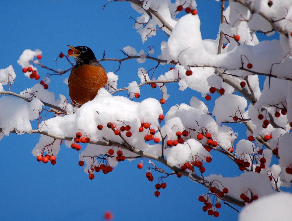 How Birds Cope With Cold in Winter | Audubon Magazine (1/3)