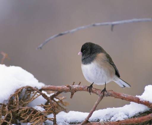 How Birds Cope With Cold in Winter | Audubon Magazine (3/3)