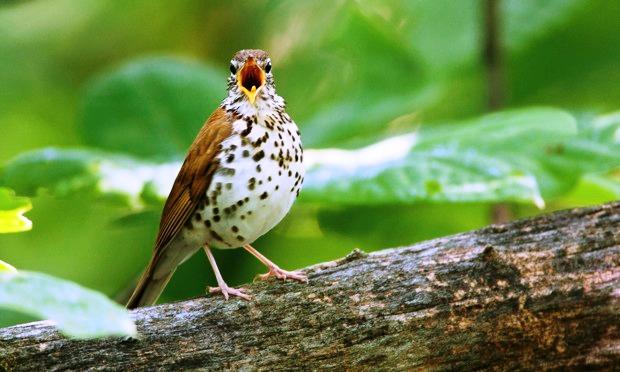 Great Backyard Bird Count 2014 (1/2)