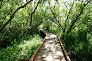 Yesler Swamp Trail