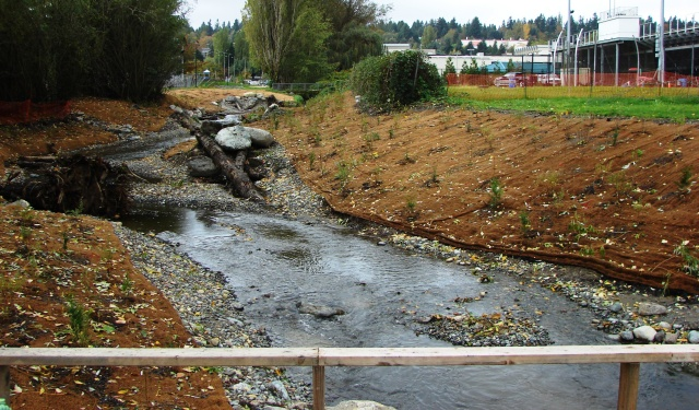 From 35th Ave NE looking westward toward Nathan Hale High School, we see the improved channel for the South Branch of Thornton Creek.  The creek channel has been widened and meanders created to slow the flow of water and improve habitat for fish.