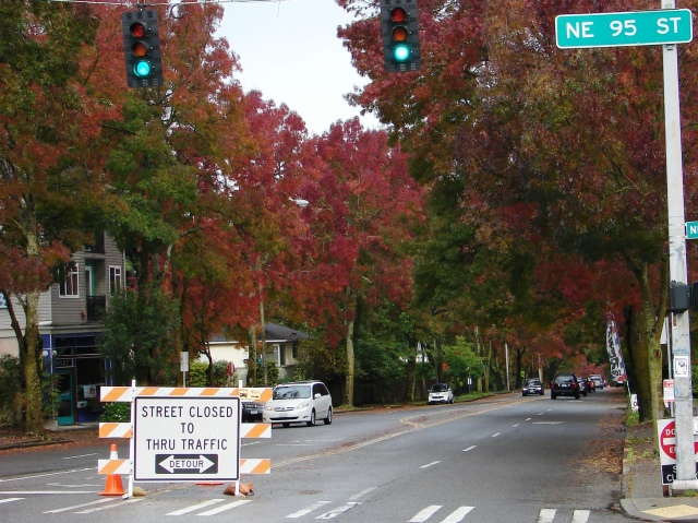 Flame ash trees line 35th Ave NE through the Wedgwood and Meadowbrook neighborhoods.  Road closure signs at NE 95th and 110th Streets warn drivers that there is no through traffic during construction at The Confluence.