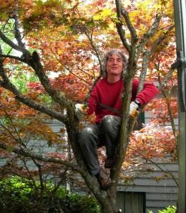 Arthur Lee Jacobson, Seattle tree expert