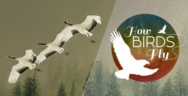 Birds exhibit at Museum of Flight