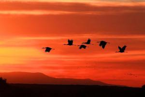 Autumn migration by Marvin de Jong USFWS Migratory Birds