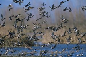 Migratory Birds USFWS photo
