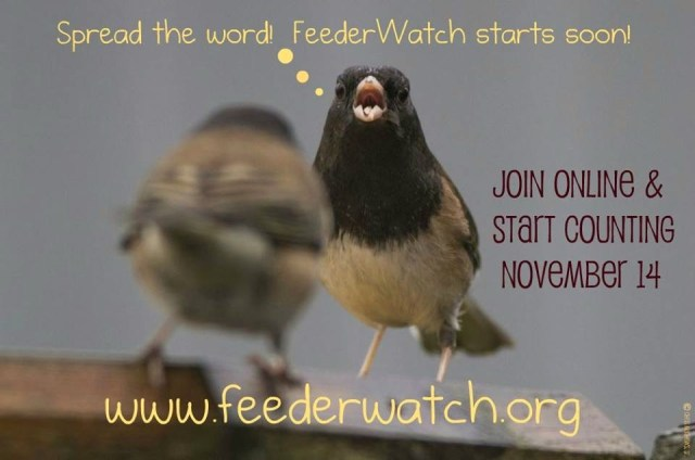 Project FeederWatch 2015