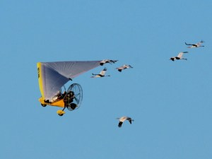 The Whooping Crane Class of 2015 left Wisconsin on September 30th, led by an ultralight plane, for wintering grounds in Florida.