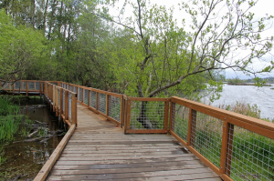 The Yesler Swamp Boardwalk is a highly accessible route through the restoration area on Union Bay.