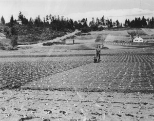 Picardo farm hillside looking east circa 1943