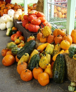 pumpkins-at-hunter-tree-farm-in-wedgwood-2014