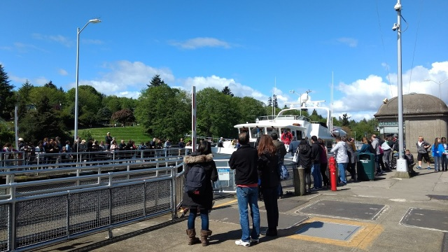 Ballard Locks watching the boats.May 6 2017
