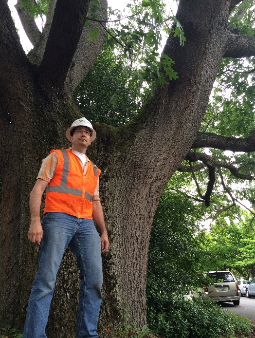 SDOT Tree Crew Supervisor Joe Markovich with scarlet oak.June 2016